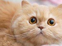 bigeyedcat