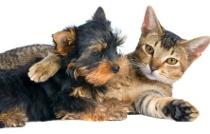 cathugging dog