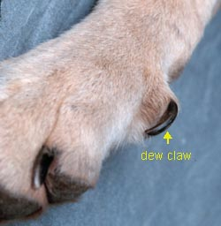 Nail And Paw Problems Naturopetic
