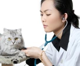 veterinarianandcat