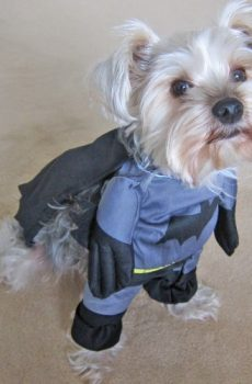 Batman dog or cat Halloween costume
