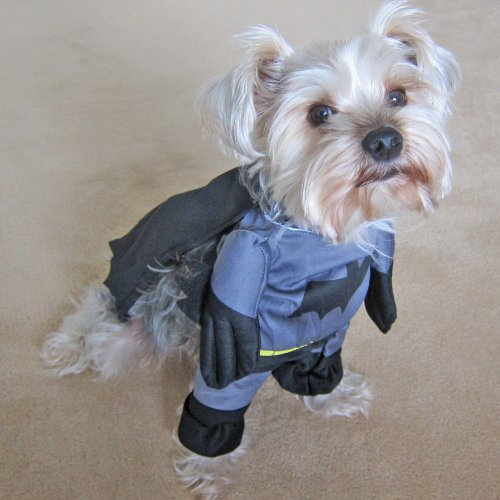 Batman dog or cat Halloween costume