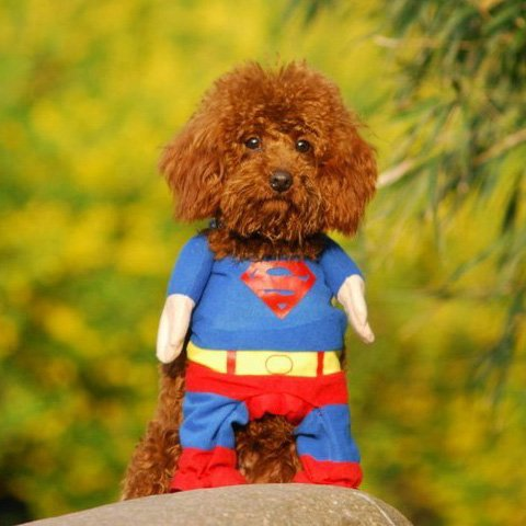Superman Costume for a very small dog or a cat
