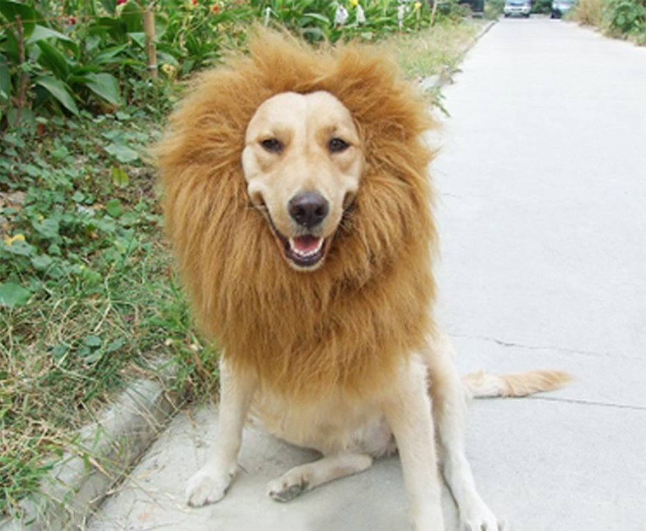 Dog Costume - Lion's Mane
